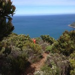 False Bay Running Tour
